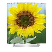 Dazzling Sunflower Shower Curtain