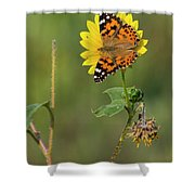 Ddp Djd Painted Lady On Sunflower 2690 Shower Curtain