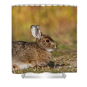 Ddp Djd Snowshoe Hare 98 Shower Curtain