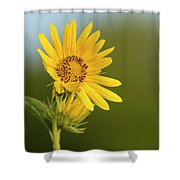 Ddp Djd Sunflower 2639 Shower Curtain
