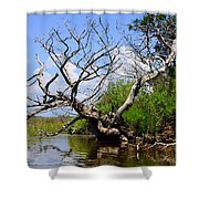 Dead Cedar Tree In Waccasassa Preserve Shower Curtain
