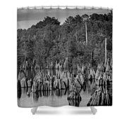 Dead Lakes Cypress Stumps Bw  Shower Curtain