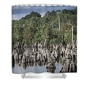 Dead Lakes Cypress Stumps Shower Curtain