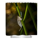 Dead Leaf On Reed Shower Curtain