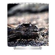Dead Marine Iguana Shower Curtain