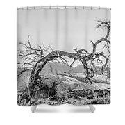 Dead Old Tree Near Monument Valley Arizona Shower Curtain
