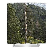 Dead Pine Shower Curtain