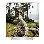 Dead Tree At Ecola Park Shower Curtain