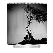 Dead Tree Bw Shower Curtain