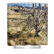 Dead Tree Panorama Shower Curtain