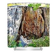 Deadwood On Cherry Creek Trail 3 Shower Curtain