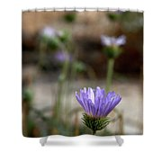 Death Valley Lavenders Shower Curtain