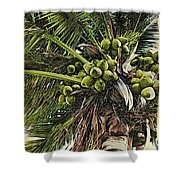 Debbie's Coconuts Shower Curtain