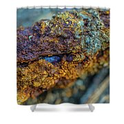 Decadent Decay  Shower Curtain