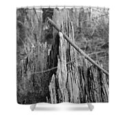 Decayed Stump Shower Curtain