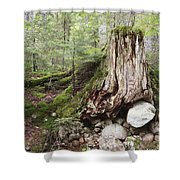 Decaying Tree Stump Shower Curtain
