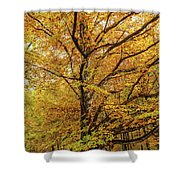 Deciduous Forest In The Autumn Shower Curtain