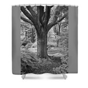 Deciduous Tree Ir Shower Curtain