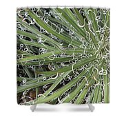 Decorations Shower Curtain