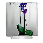 Decorative Orchid Photo A6517 Shower Curtain
