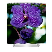 Deep Blue Orchid Shower Curtain