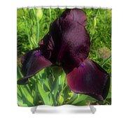 Deep Burgundy Iris Shower Curtain
