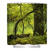 Deep Forest Scenic Shower Curtain