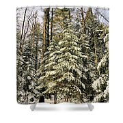 Deep In The Maine Woods Shower Curtain