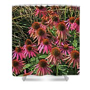 Deep Pink Echinacea Straw Flowers Green Leaf And Grass Background 2 9132017 Shower Curtain