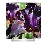 Deep Purple Irises Dark Purple Irises Summer Garden Art Prints Shower Curtain