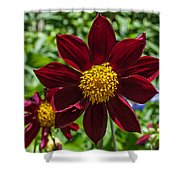 Deep Red And Yellow Flowers Shower Curtain