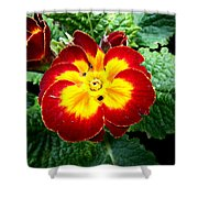 Deep Red Bright Yellow Shower Curtain