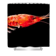 Deep Sea Shrimp Shower Curtain
