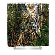 Deep Woods Shower Curtain