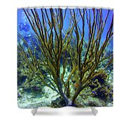 Deepwater Gorgonia Shower Curtain