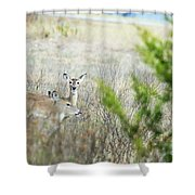 Deer 005 Shower Curtain
