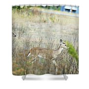 Deer 006 Shower Curtain