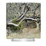 Deer 009 Shower Curtain