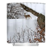 Deer At Castlewood Canyon Shower Curtain