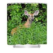 Deer Beauty II Shower Curtain
