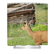 Deer By Ghost Town Shower Curtain