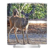 Deer Doe - 1 Shower Curtain