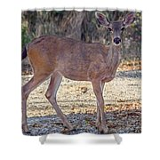 Deer Doe - 2 Shower Curtain