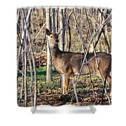 Deer Early Spring Shower Curtain