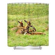 Deer Family Shower Curtain