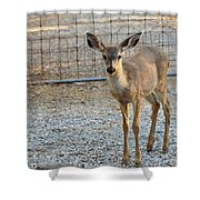 Deer Fawn - 1 Shower Curtain