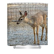 Deer Fawn - 2 Shower Curtain