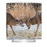 Deer Fight Shower Curtain