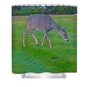 Deer Grazing In City Field Shower Curtain