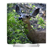 Deer Having Lunch Shower Curtain